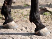 Osteopathie Pferd Leipzig