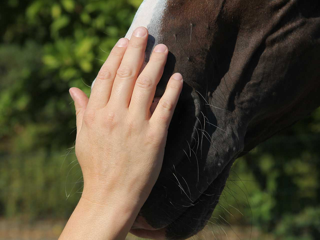 Pferdeosteopathie Therapeutin
