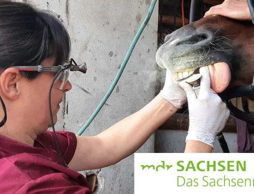 Moni unterwegs… bei einer Pferdezahnärztin und -Osteopathin MDR SACHSEN – DAS SACHSENRADIO
